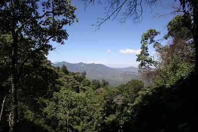 Top Land/Plant-scapes