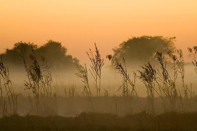 swamp_dawn2_big.jpg