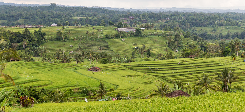 The Jatiluwih rice fields