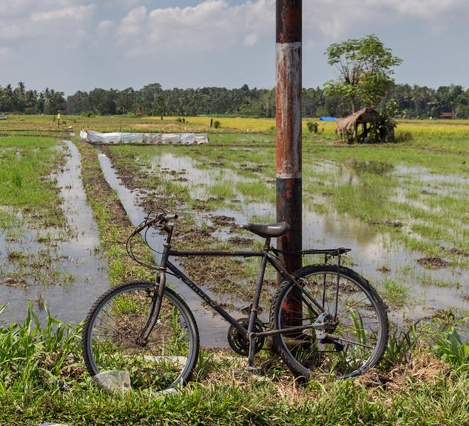 Rice field bike