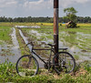 Rice field bike
