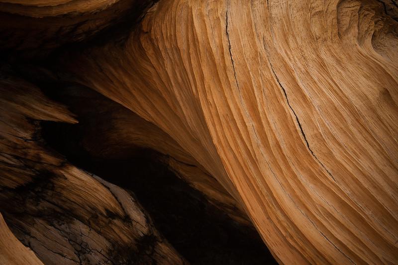 Bristlecone Pine Trunk Texture Closeup
