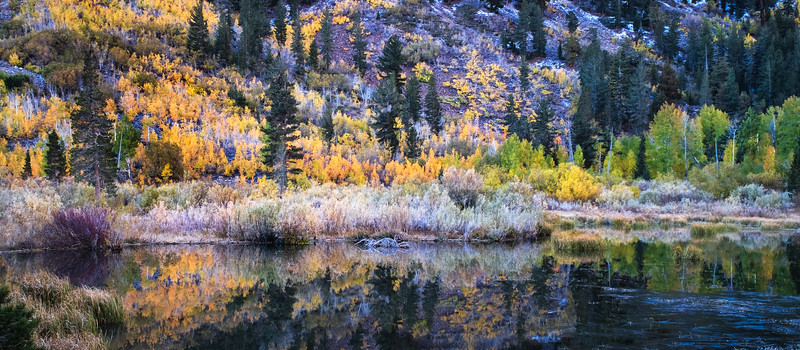 Fall Colors, Eastern Sierra Nevada