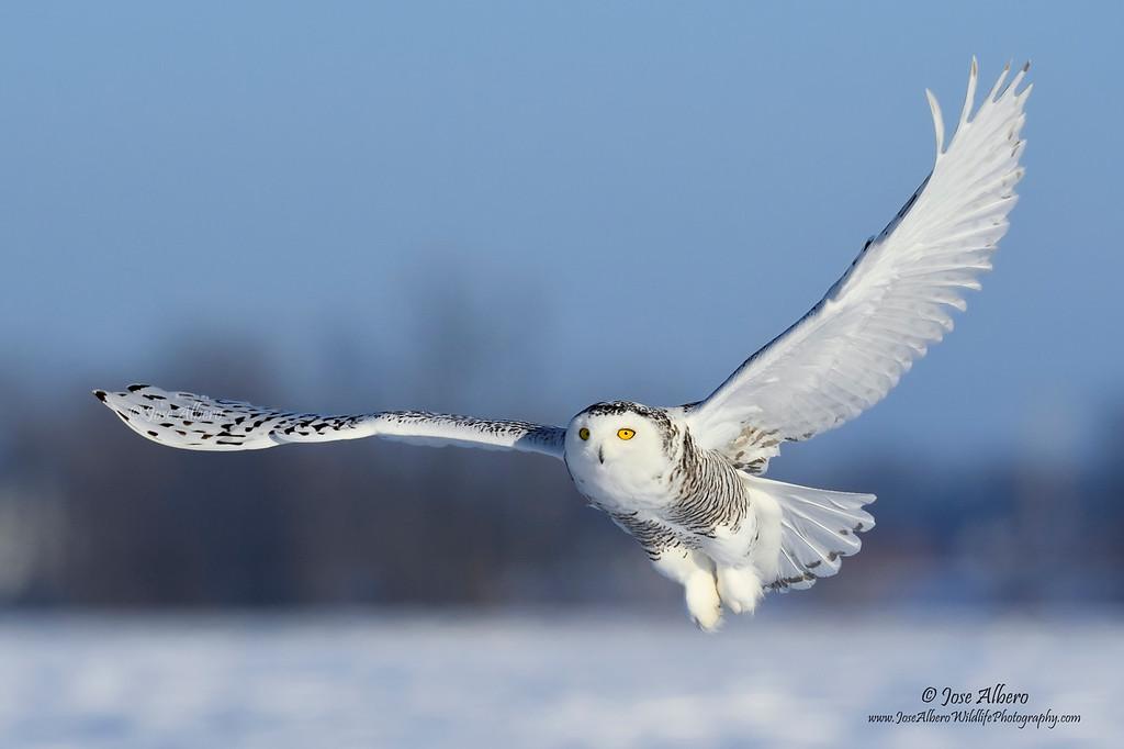 Snowy Flyby