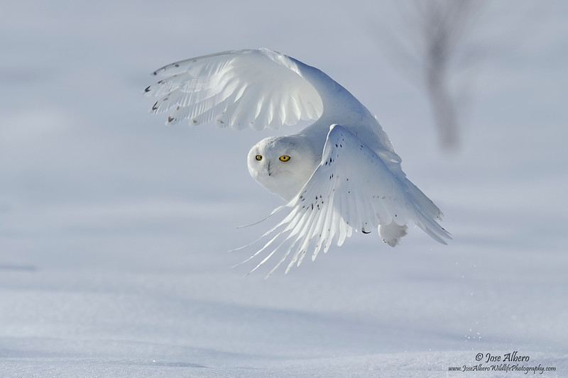 Snowy Take-Off