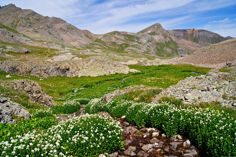 Looking northward down the lush upper American Basin beneath Handies Peak; Colorado San Juan Range.