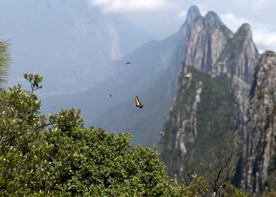 The flitting denizens of Copete de las Aguilas