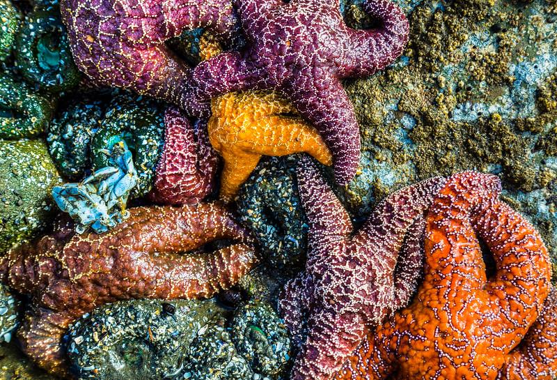 Ruby Beach,Olymic Peninsula, Washington, USA