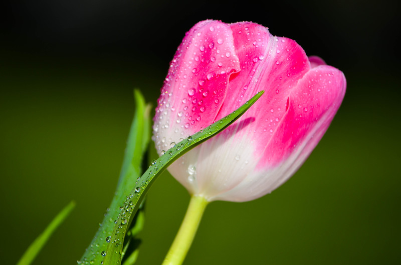 Dew-Covered Flower