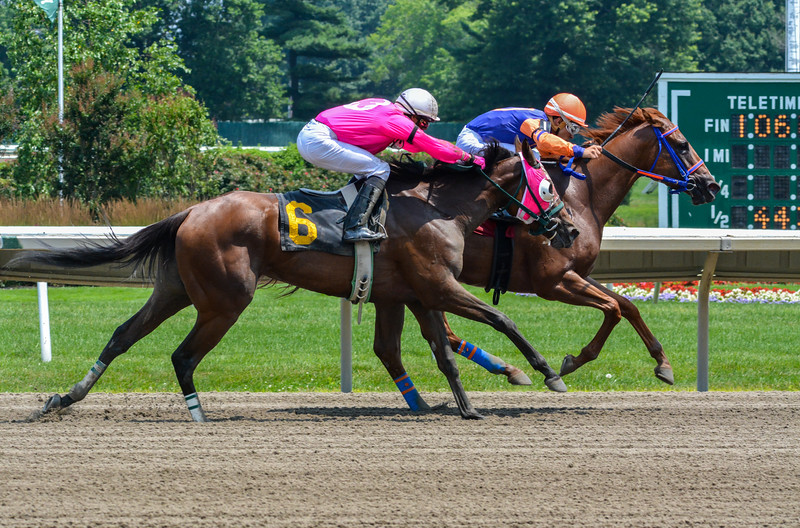 Thoroughbred Horses at Monmouth Park