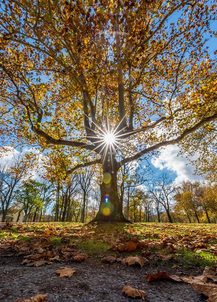 Sun Burst Through Autumn Colors at Alliare State Park 11/2/17