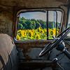 A Rusty Old Truck In  A Sunflower Field 8/14/21