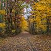 Autumn Scene at Manasquan Reservoir 11/3/18