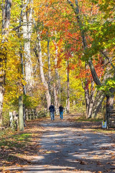 Autumn Walk 11/2/16