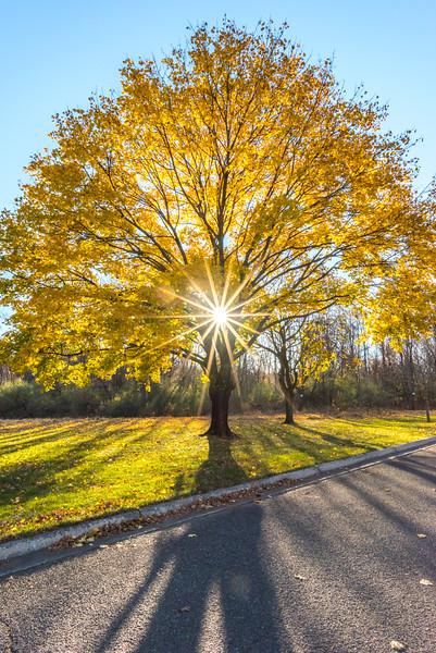 Morning Sun Burst Through Autumn Colors 11/23/16