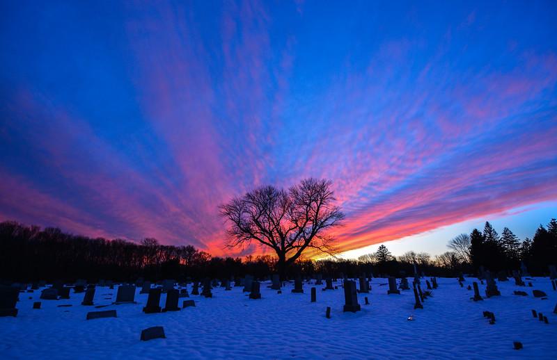 Colorful Sunset Over Evergreen Cemetery Tree, Farmingdale, NJ