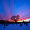 Colorful Sunset Over Evergreen Cemetery Tree, Farmingdale, NJ