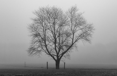 Tree Silhouette on Foggy Morning 4/28/18