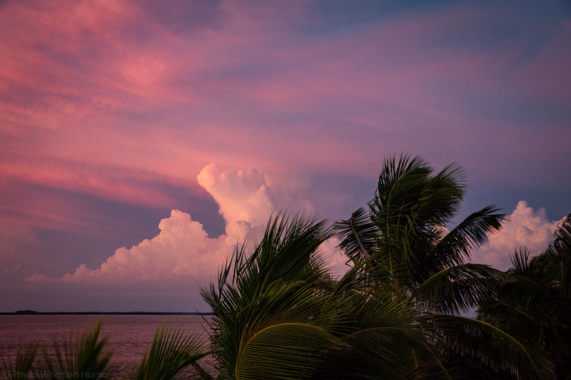 Palm Cloud Sunset