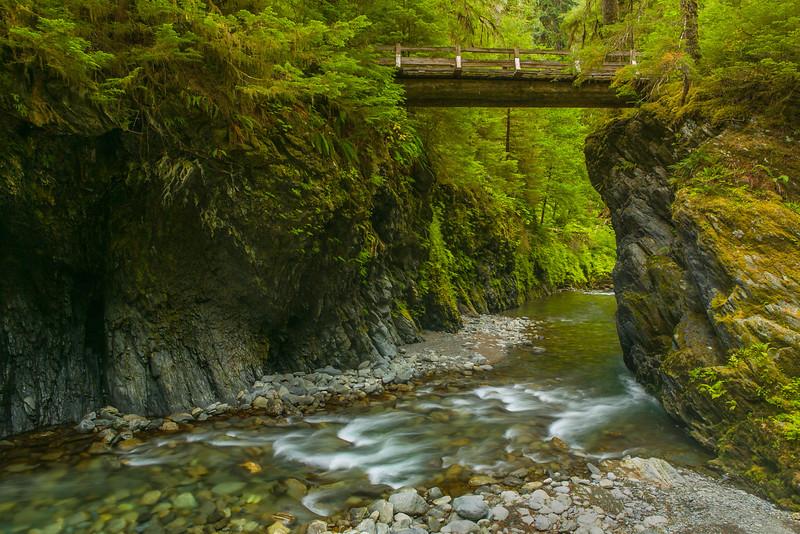 ~ Quinault Rainforest ~