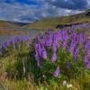 ~ Purple Paradise ~