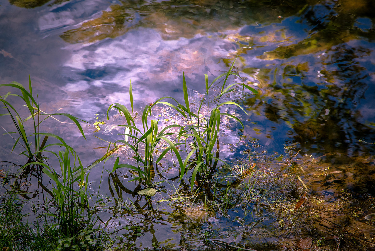 Edge of the Pond