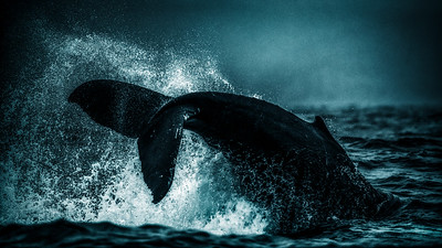 Powerful  Whale Tail
