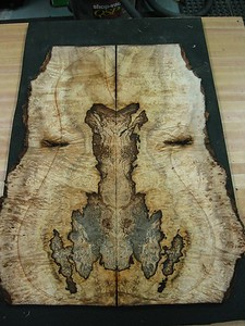 BLDesign.us: Spalted Myrtle Burl 1-001  sold.  Used for the top of #012  Photos: Beau Leopard. Slideshow Music: Nick Rosenthal and Beau Leopard.  All Content © 2005-2007  Beau Leopard Design .:. Custom Bass Guitars