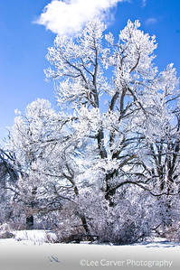 Frost and snow encrust a lone tree in beauty.