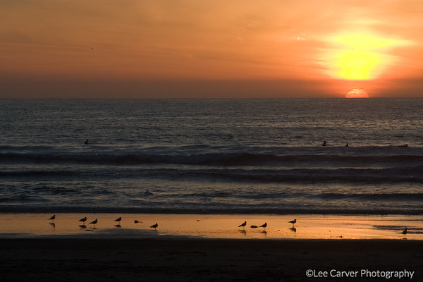 Sunset sillouettes surfers and birds.