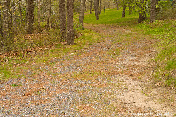 Roadway to summer cabin in the woods
