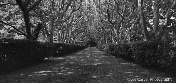 Tree lined lane in France