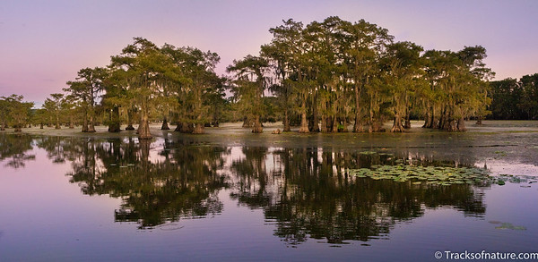 Bayou at dusk, Louisiana