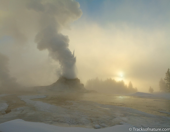 Castle Geyser sunrise, Yellowstone National Park