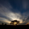 Tree at Sunset, Near Ponder, Texas (January 2011)