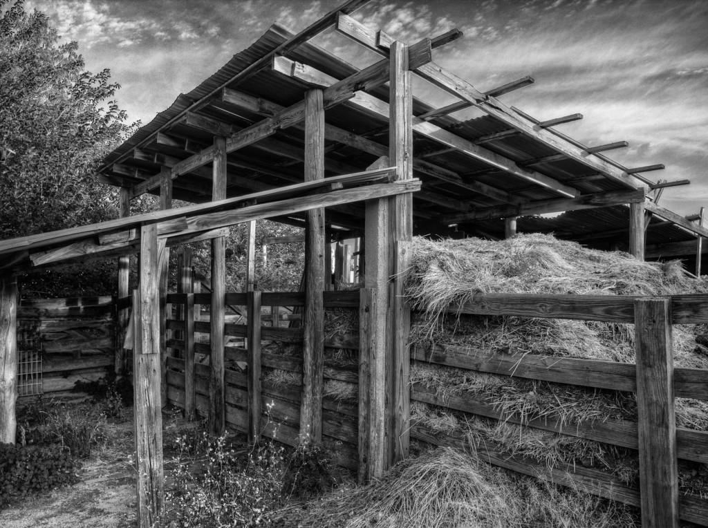 Hay, Ft. Worth Stockyards (June 2011)