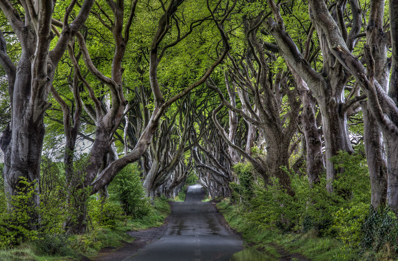 Dark Hedges, County Antrim (May 2016)