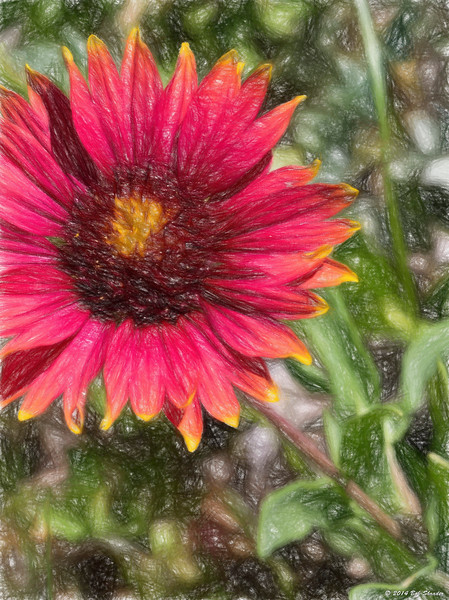 Indian Blanket in Topaz Impression