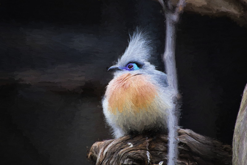 Blue Eye Bird Topaz E Hopper I.JPG
