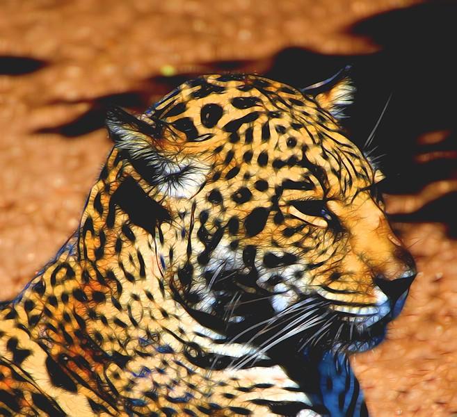 T_Cheetah Kitty 2.jpg