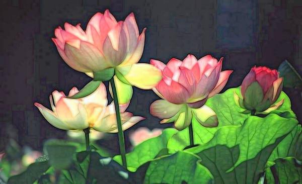 T-Water Lillies.jpg
