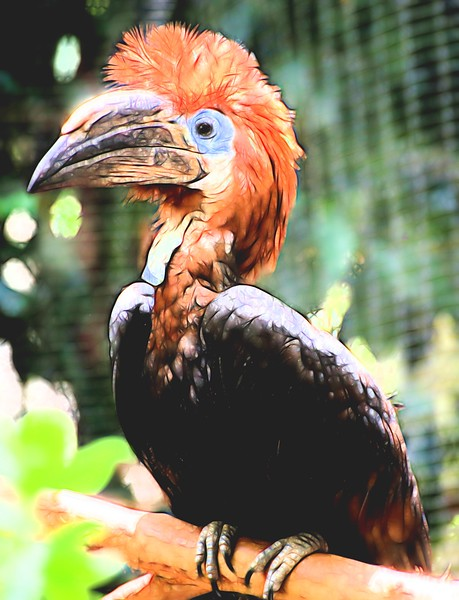 T-Hairy Bird Mysterious.jpg