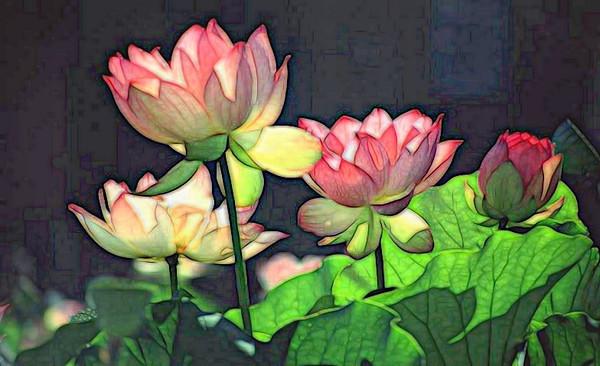 T-Water Lillies Bright.jpg
