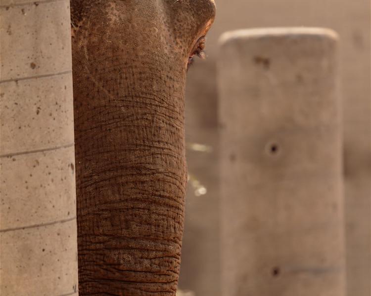 Elephant Camouflage