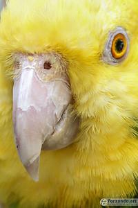 It's Big Bird!