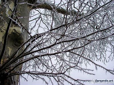 Winter's Wrath
