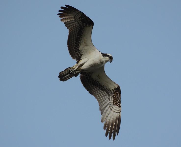 """See Eagle"""