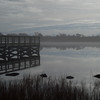 Morris Landing advection fog