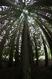 Inverary Castle Gardens