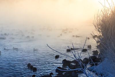 Calgary Pond